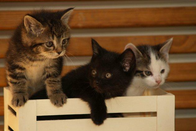 socializing kittens