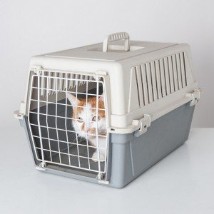 cat transport