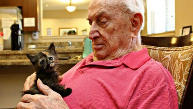 Cats and kittens help elders at senior home