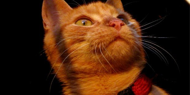 Top US cities for cats