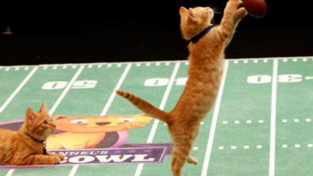 Hallmark Channel Kitten Bowl 2015
