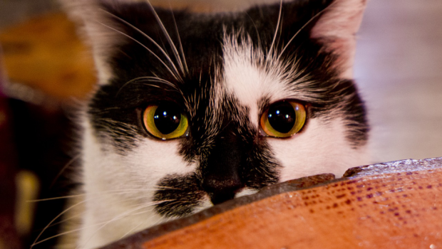 Tips on making your cat happy