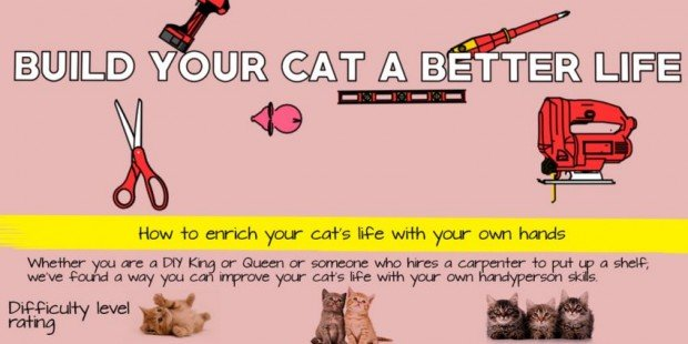 Simple tips to build your cat a better life