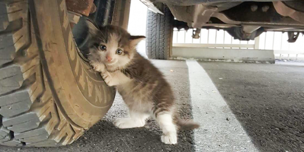 Guy Rescued A Scared Kitten From Under A Truck